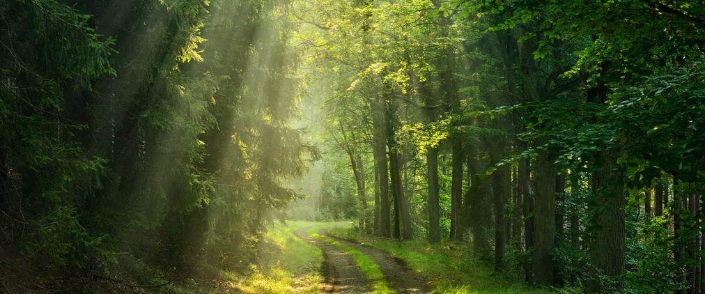 Baumbestattung in Bestattungswald und Friedwald