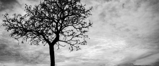 Verfügung von Todes wegen: Testament und Erbvertrag